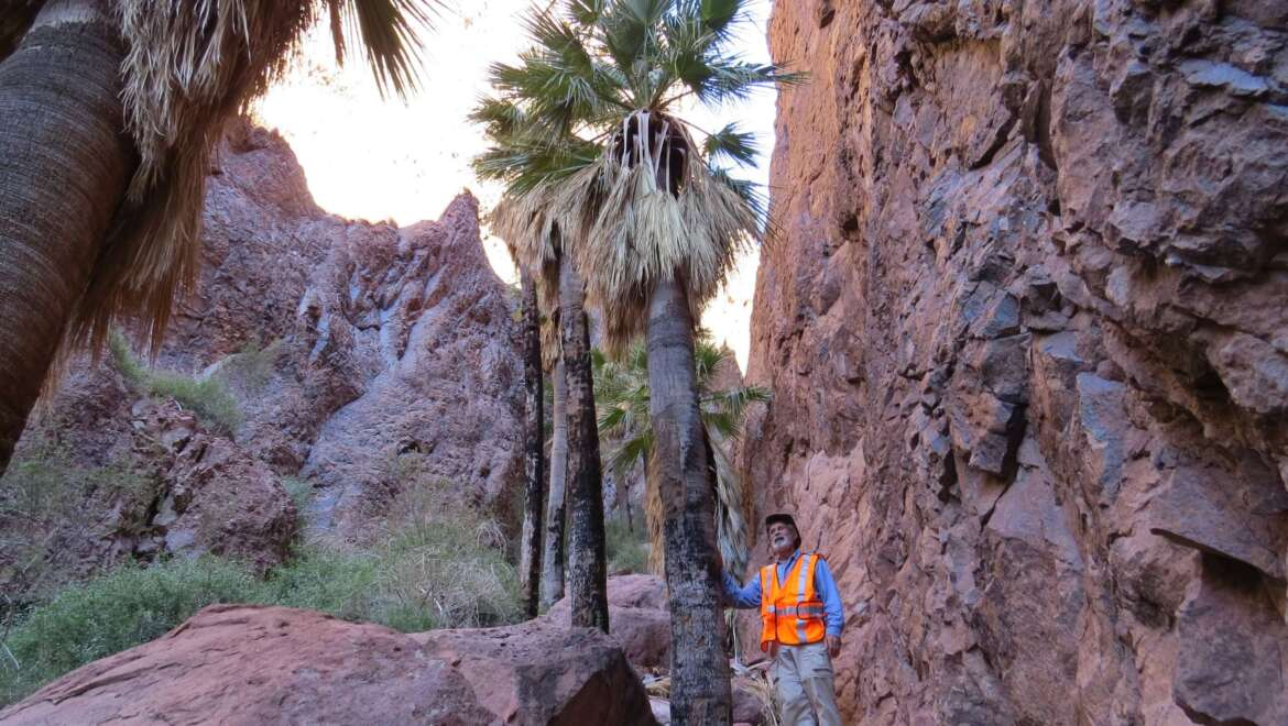 """SFPS General Meeting – June 7 – Dr. Larry Noblick """"An Ice Age Relic Palm in Arizona"""""""