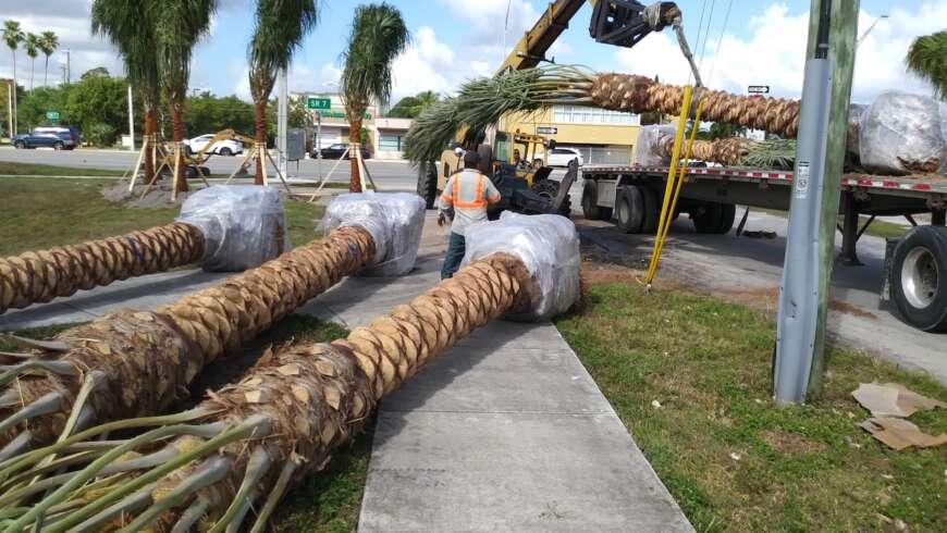 "SFPS General Meeting –  Aug. 2nd – ""Using Palms Along Florida Roadways: A Landscape Inspectors Perspective"" Benjamin Koubek"